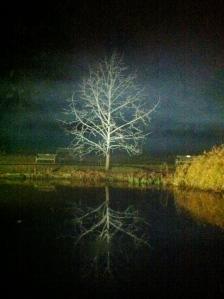 Spooky tree at Kew