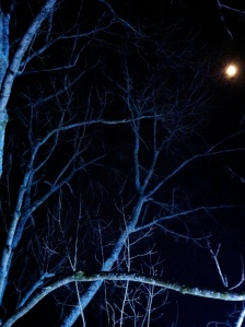 The moon and blue branches