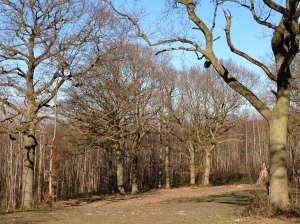 Shorne Woods