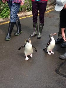 Penguin Parade at Edinburgh Zoo