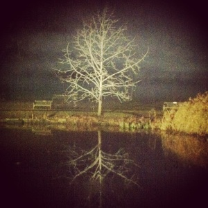 Spooky tree at Kew Gardens