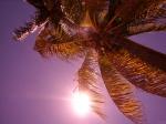 Sunbathing in St Kitts